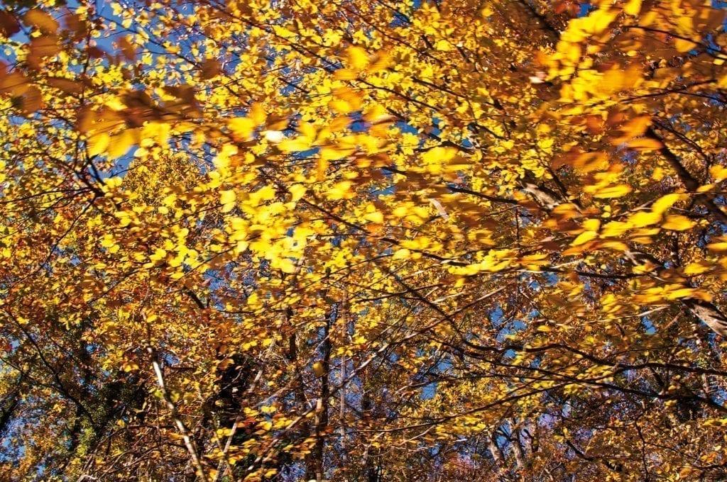 Herbst in Garo Banyo