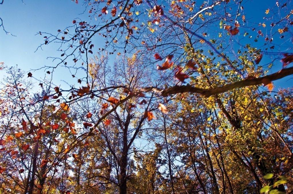 Herbstliches Blätterdach an der Costa Brava