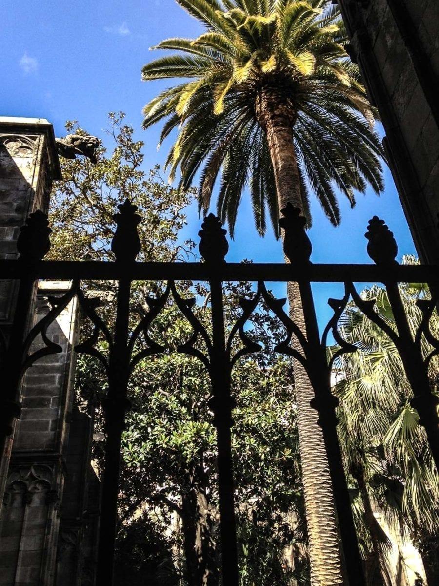 Palmen im Kreuzgang der Kathedrale.