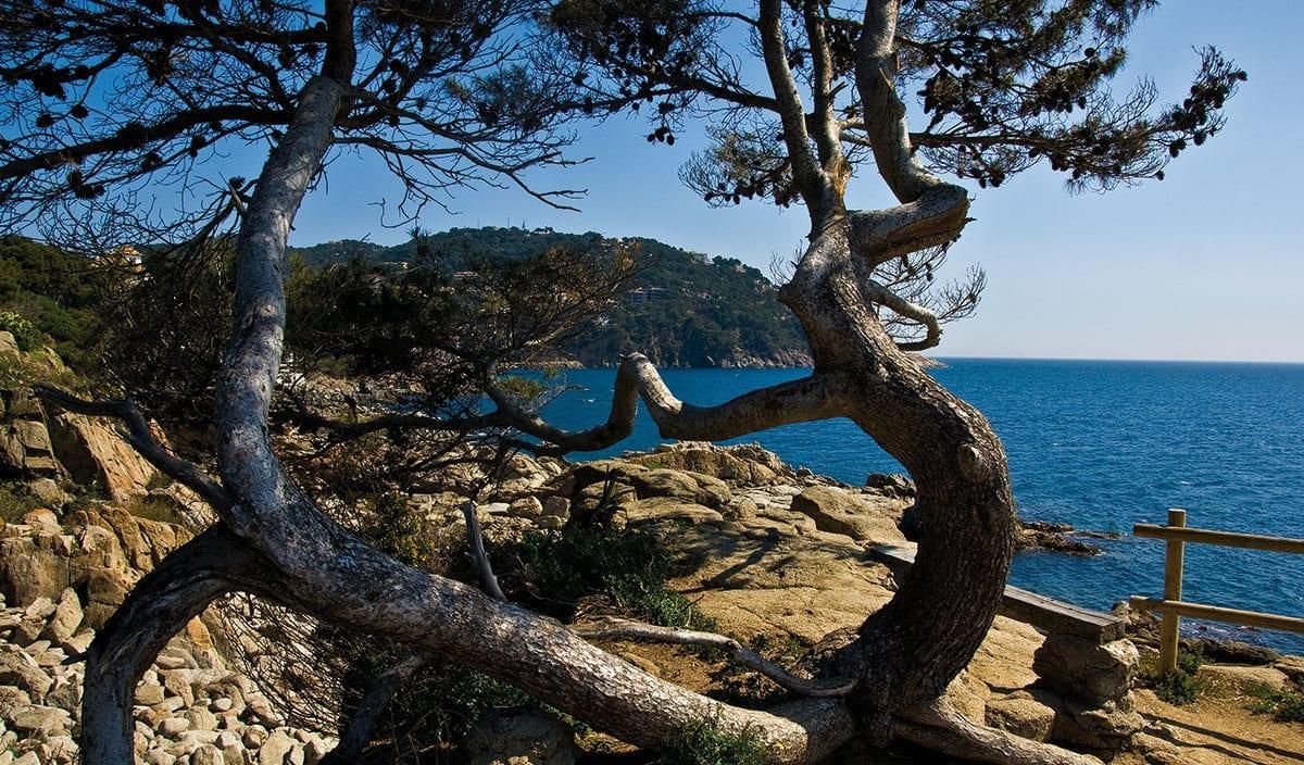 Felsen, Meer. Pinien und paradiesische Ruhe