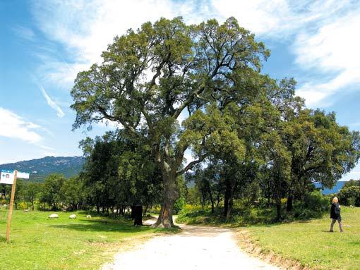 Flora und Fauna der Serra de l'Albera