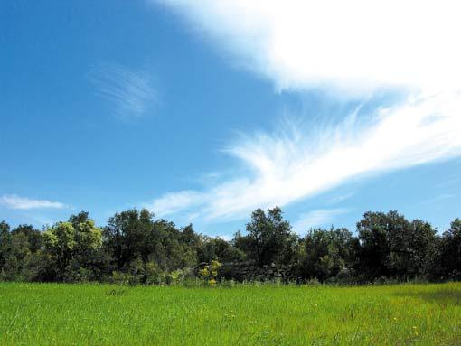 Albera-Wolke