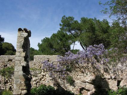 Glyzinie Mauer