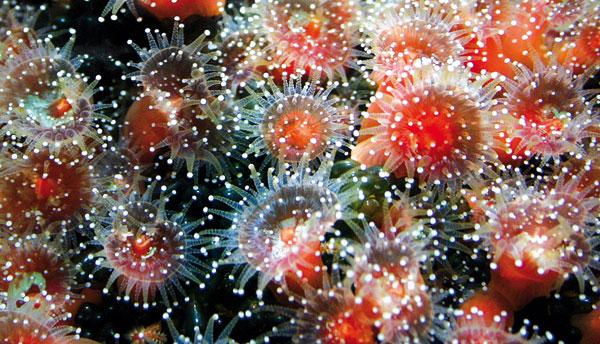 Eine Vielzahl von leuchtenden Organismen beginnt sich zu regen