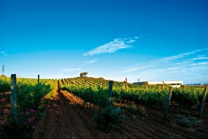 Weinberg einer der guten Weingüter an der Costa-Brava