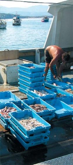 Fischkutter im Fischereihafen von Port de la Selva