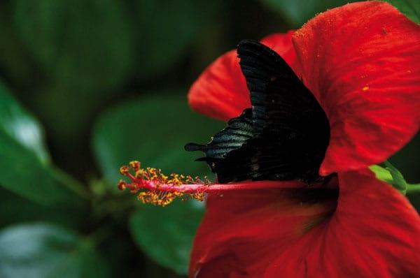 Park mit großen farbenprächtigen exotischen Schmetterlingen und bunten Papageien