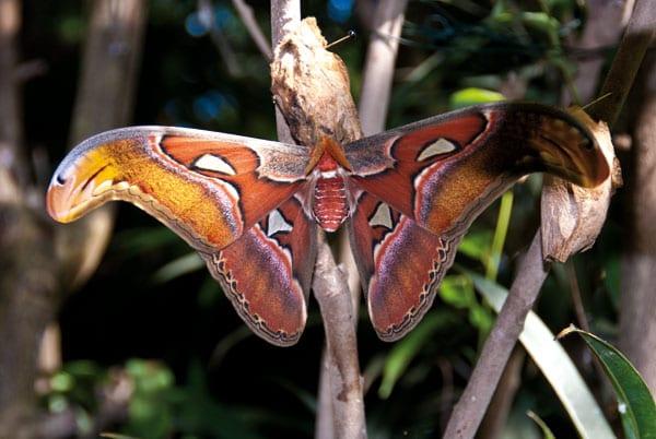 Schmetterlinge als Inspirationsquelle für viele Künstler