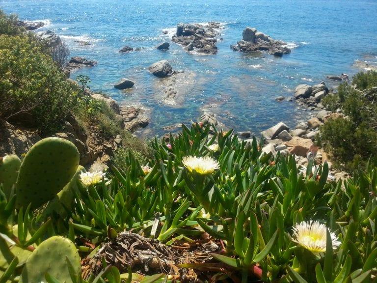 Wanderung – Calella de Palafrugell nach Tamariu