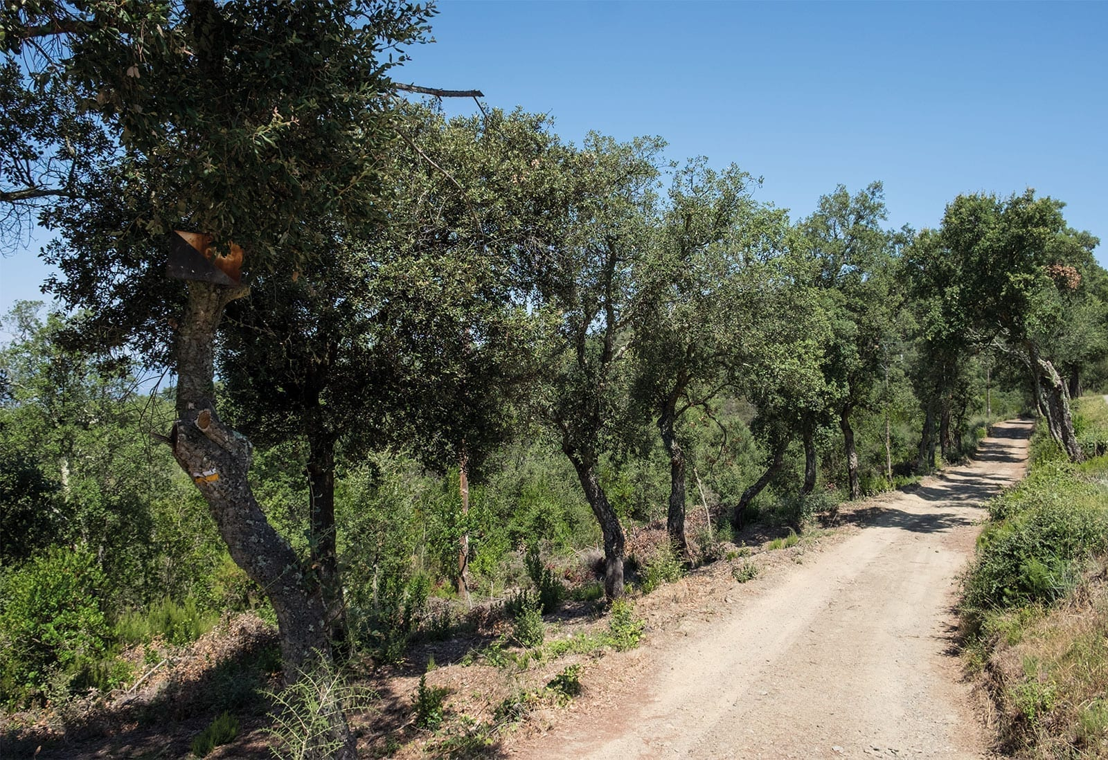reserva natural de Las Gavarres, Flora y Fauna