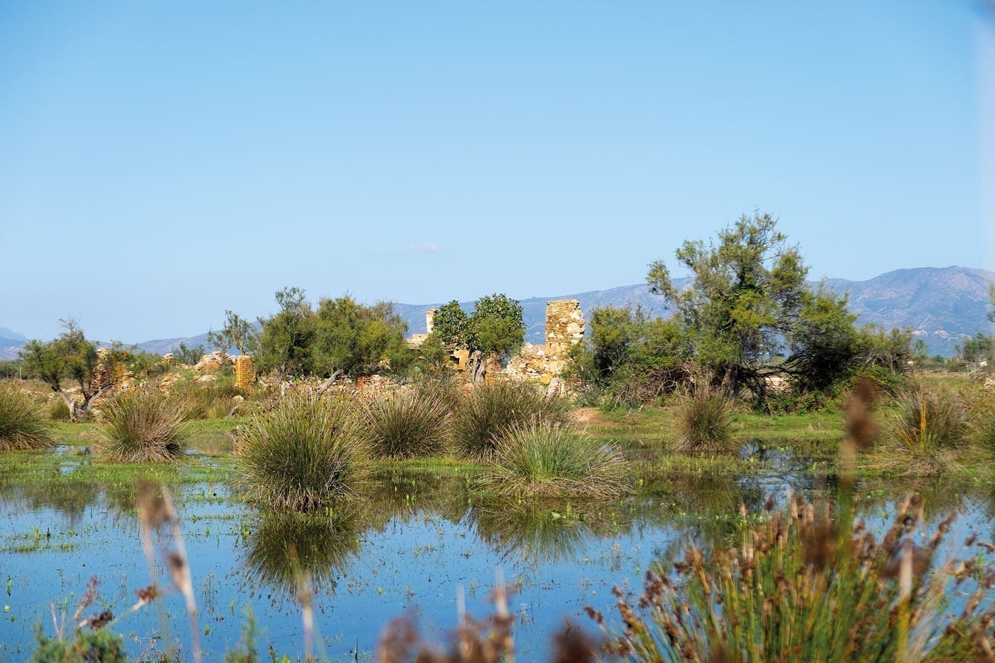 wandern, naturschutzgebiet, naturpark aiguamolls de l'Empordá, mediterran, flamingo, camargue, berge, sumpfgebiet
