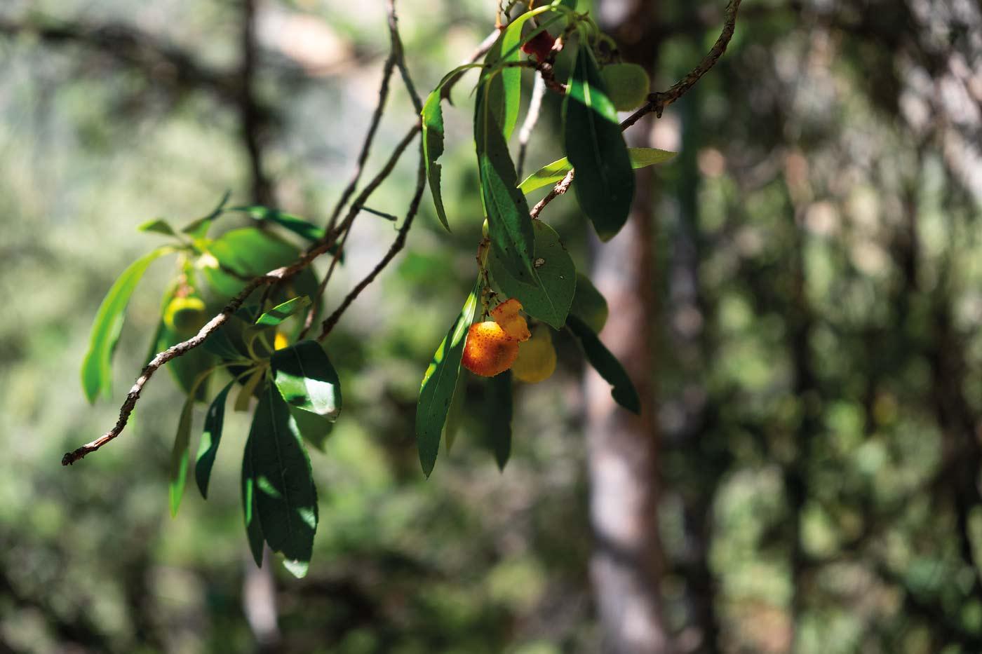 Beeren, Wald, Wanderlust, Natur, Schluchtenwanderung, Congost de Montrebei
