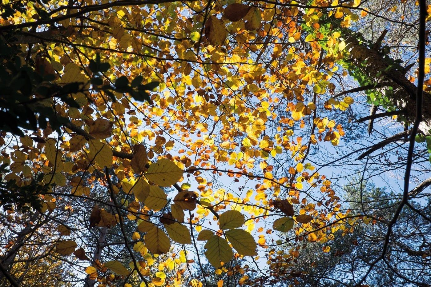 Herbst, Jahreszeiten, Katalonien, Costa Brava
