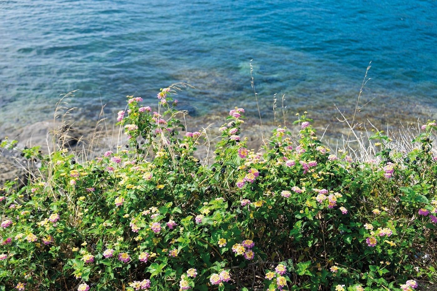 Camí de Ronda, Wandern in Cadaqués, Costa Brava, Mittelmeer