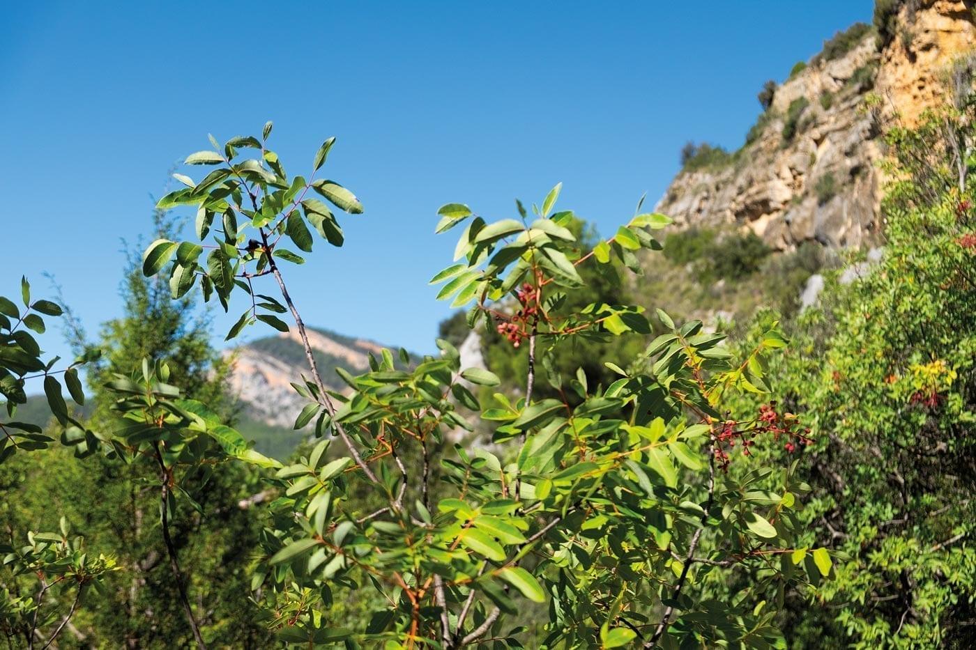 Naturpur, Wanderlust, Natur, Schluchtenwanderung, Wandern im Congost de Montrebei