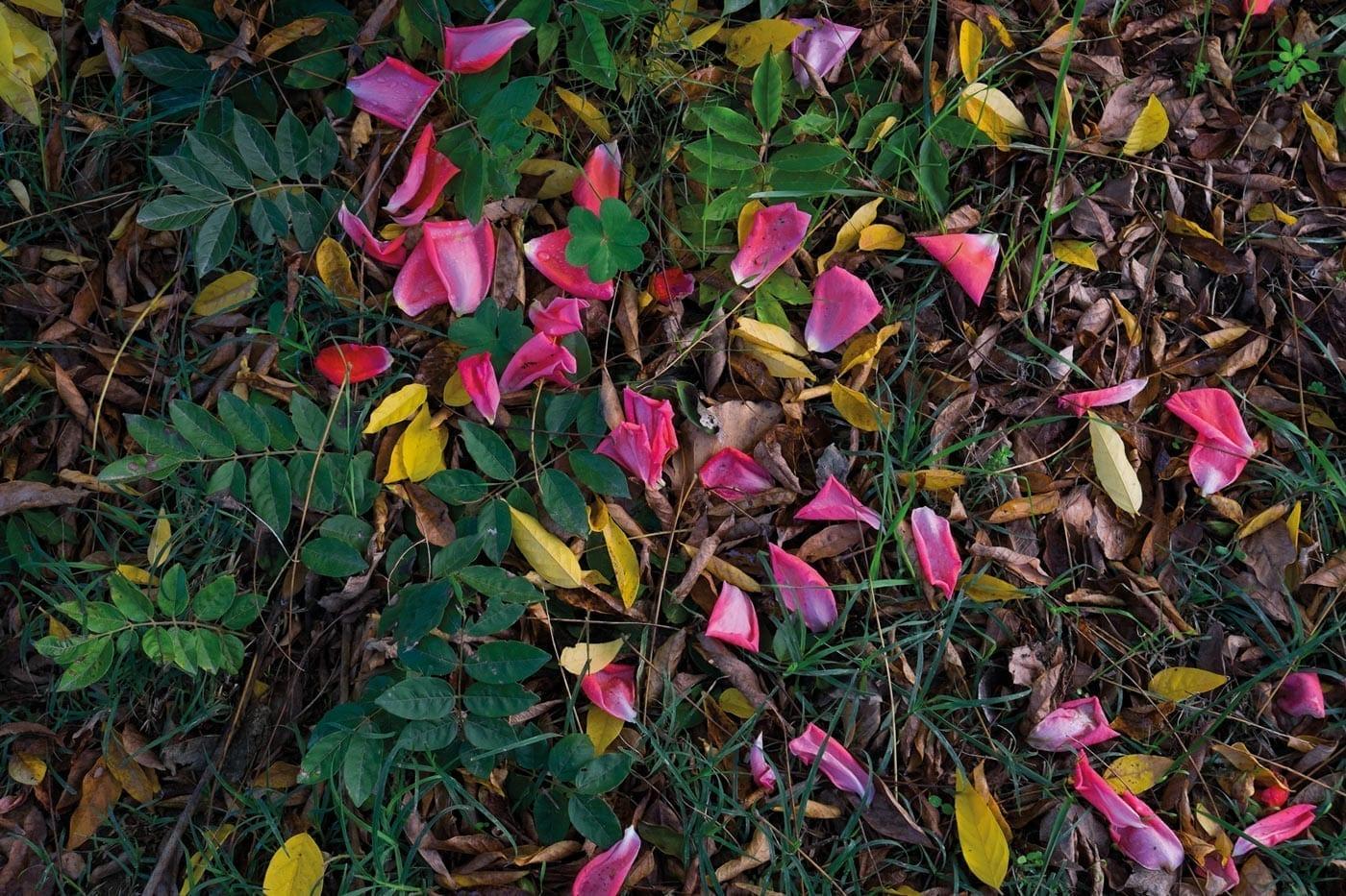 Wanderlust, Wald, Herbst, November, Naturliebe, Natur