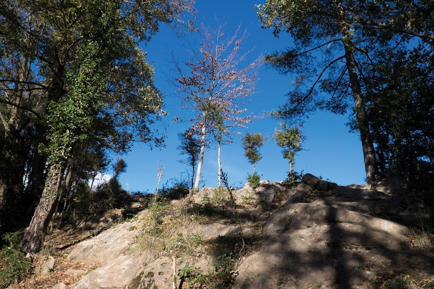 Wanderlust, Wald, Herbst, November, Naturliebe, Natur. Der Herbst ist da!