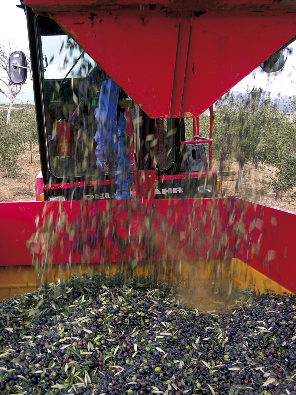 Erntegerät bei der olivenöl Produktion