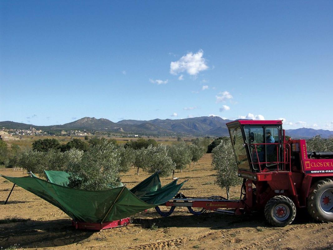 Gerät zur Olivenernte