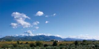Olivenplantage um Olivenöl zu produzieren
