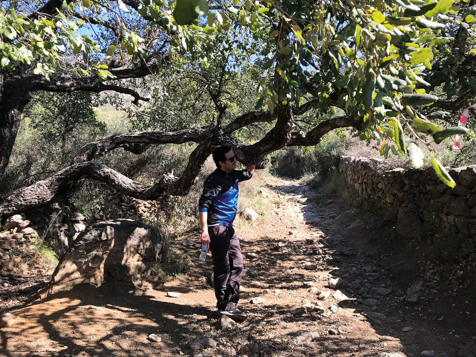 verbogene Bäume beim Aufstieg