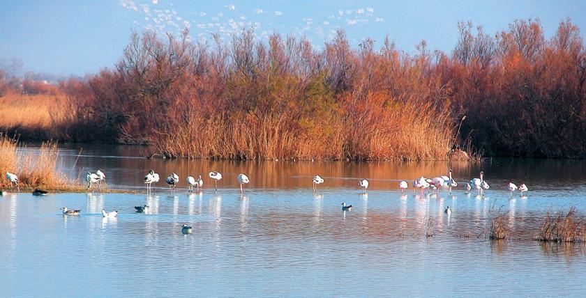Flamingos im Aiguamolls