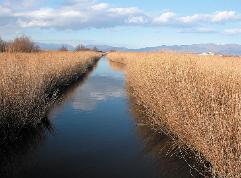 Sumpfgebiet bei Sant Pere Pescador