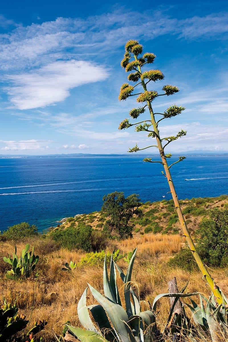 Blick vom Punta Falconera auf das Meer