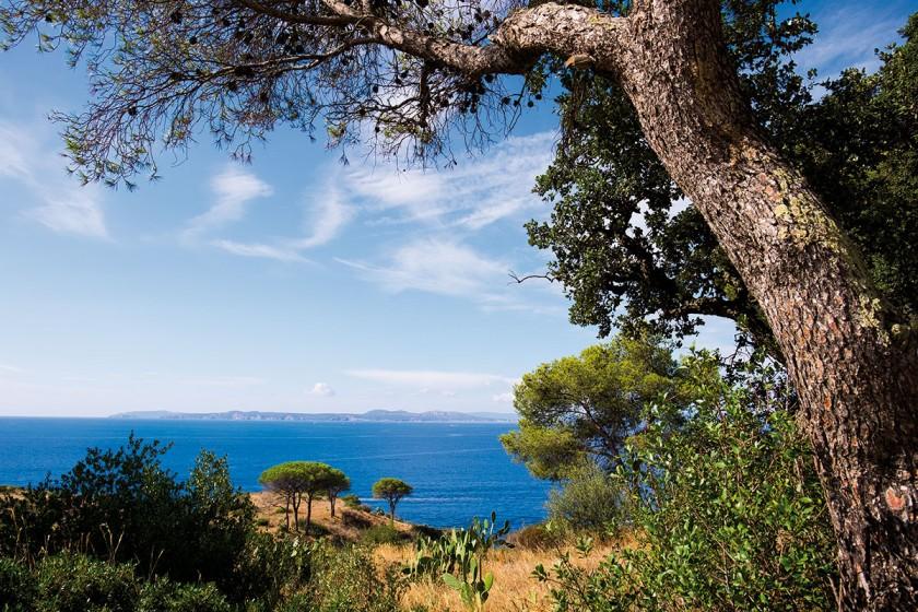 Alter Baum am Streifenweg am Punta Falconera