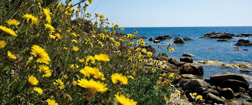Blühende Wiese inmitten einer Bucht.