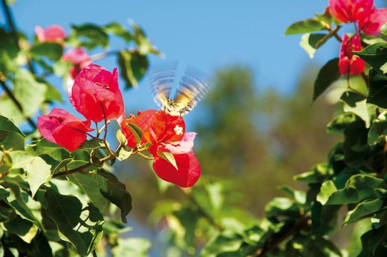 Jardins Cap de Roig