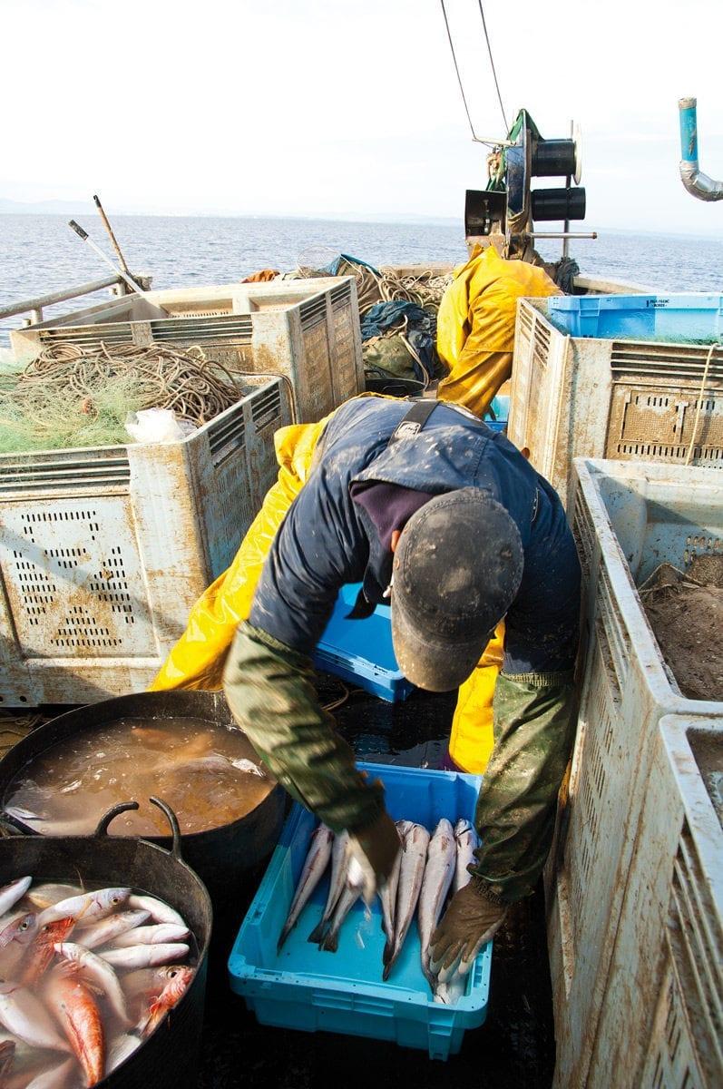 Fischer Sortiert den Fang