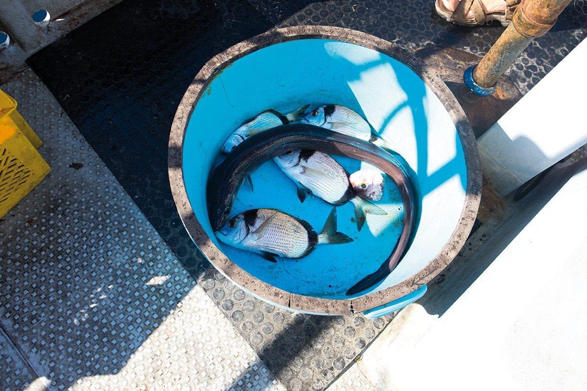 Kleine Fische und ein Aal