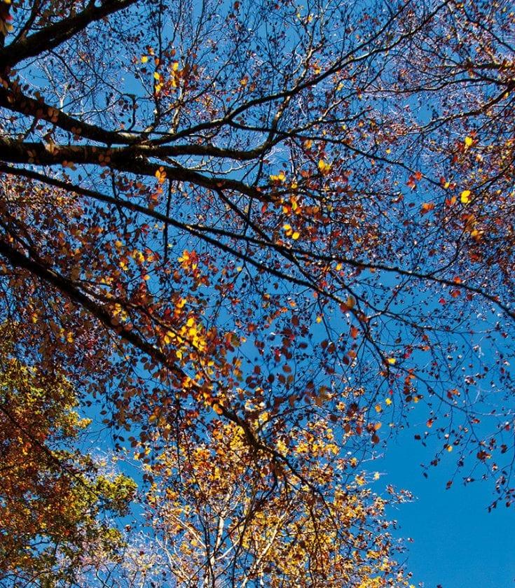 Das Wispern der Blätter