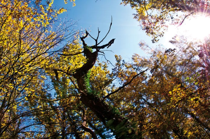 Wald mit Herbstlaib