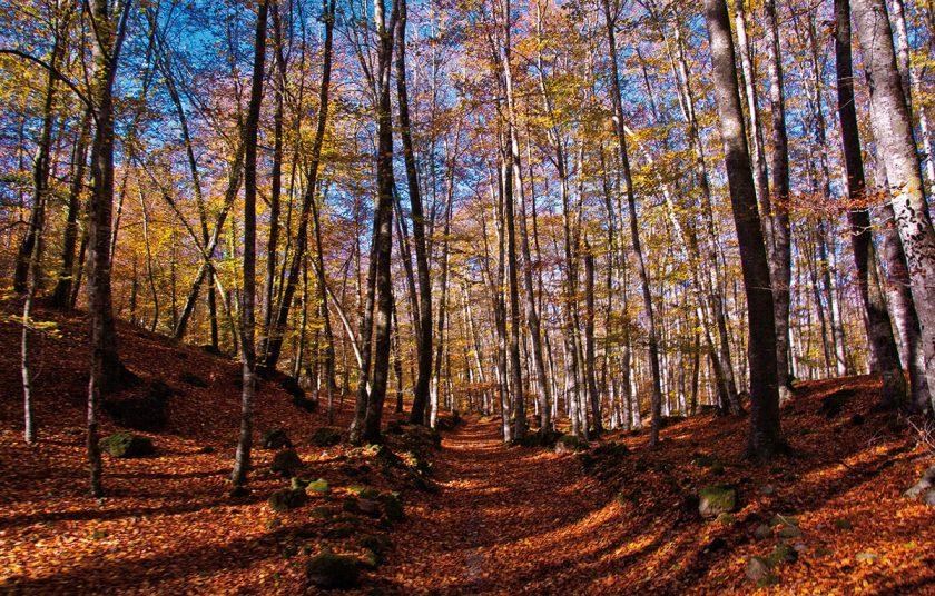 Zauberwald im Herbst