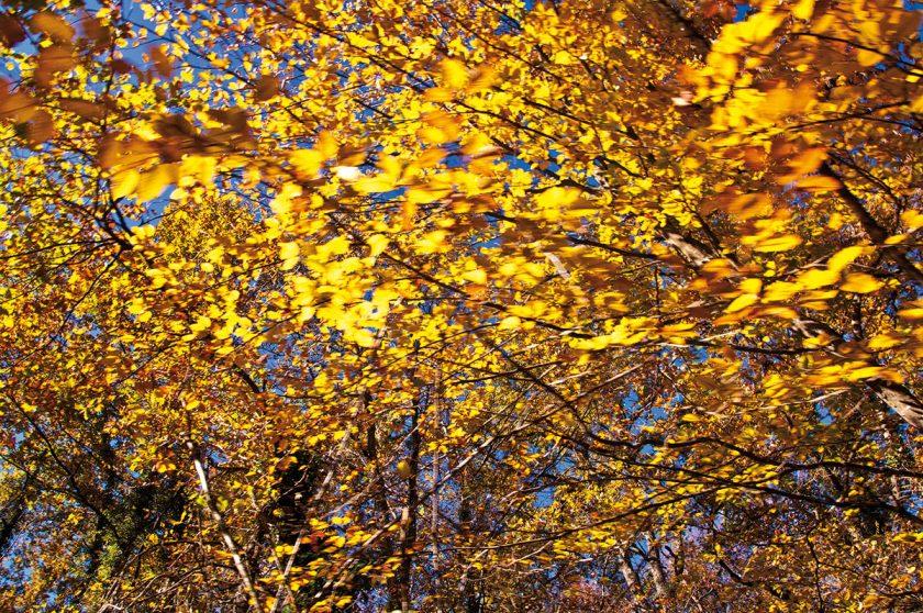 Bunter Herbsttraum in Katalonien