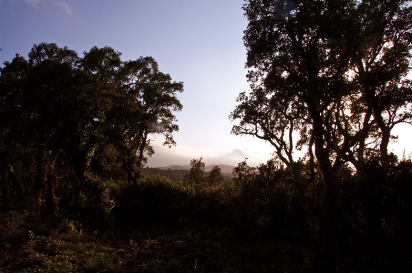 Herbstliche Landschaft an der Costa Brava.