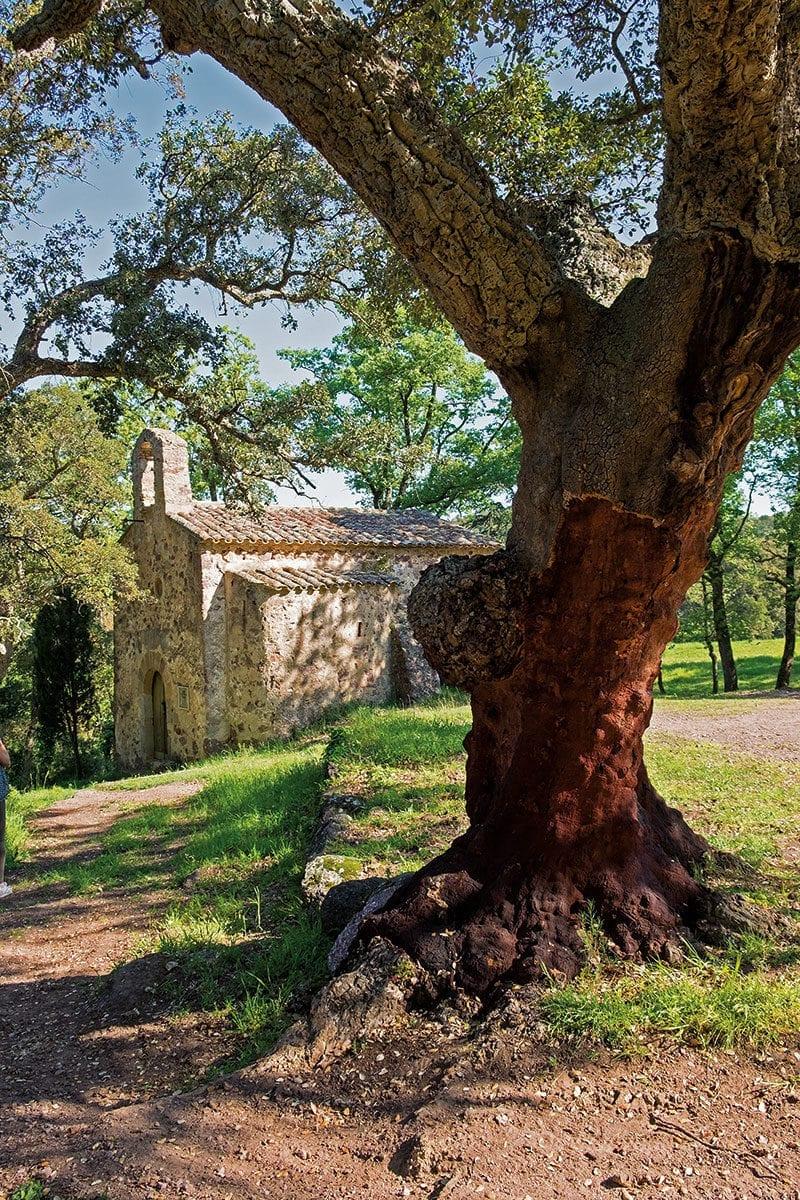 Alte Kirche hinter Baum