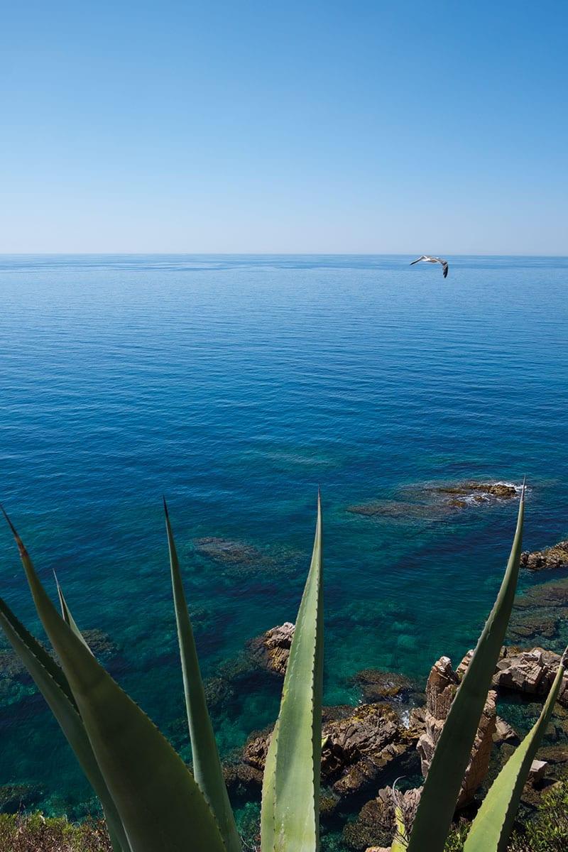 Kreisende Möwe über Meer