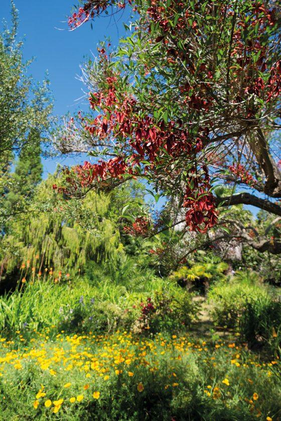 Baum im Marimurtra Garten