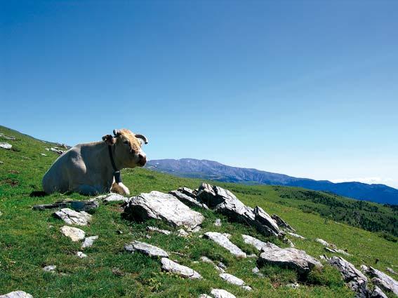 Pyrenäen: Molló – Espinavell – Setcases