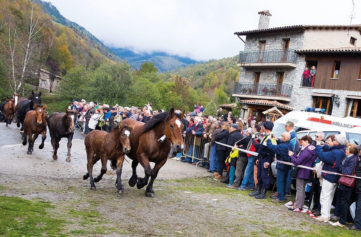 Pferde durchqueren staunende Menschenmenge