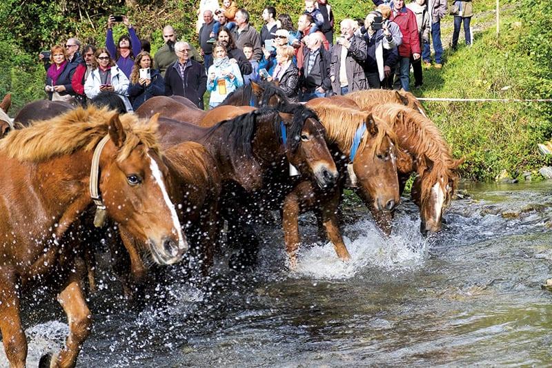 Pferde in Espinavell