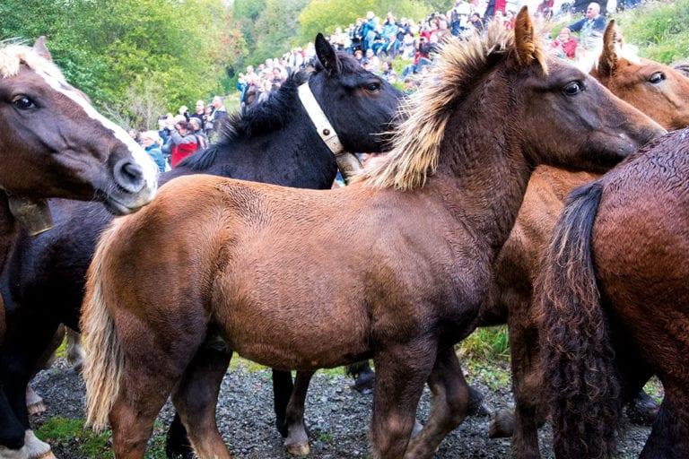Pyrenäen und Costa Brava – Pferde, Burgen und Denkmäler