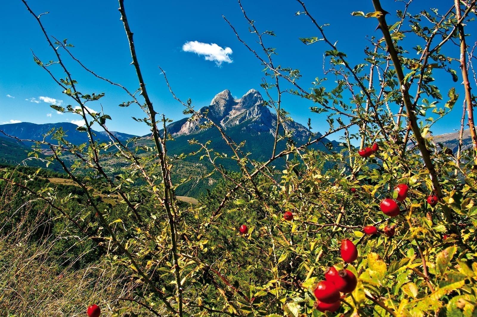 Blick durch grüne Dickicht auf die Pyrenäen