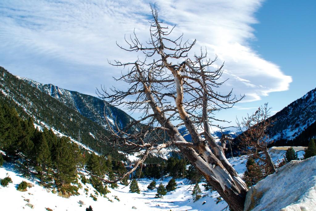 Pyrenaen-Handstand-Schnee