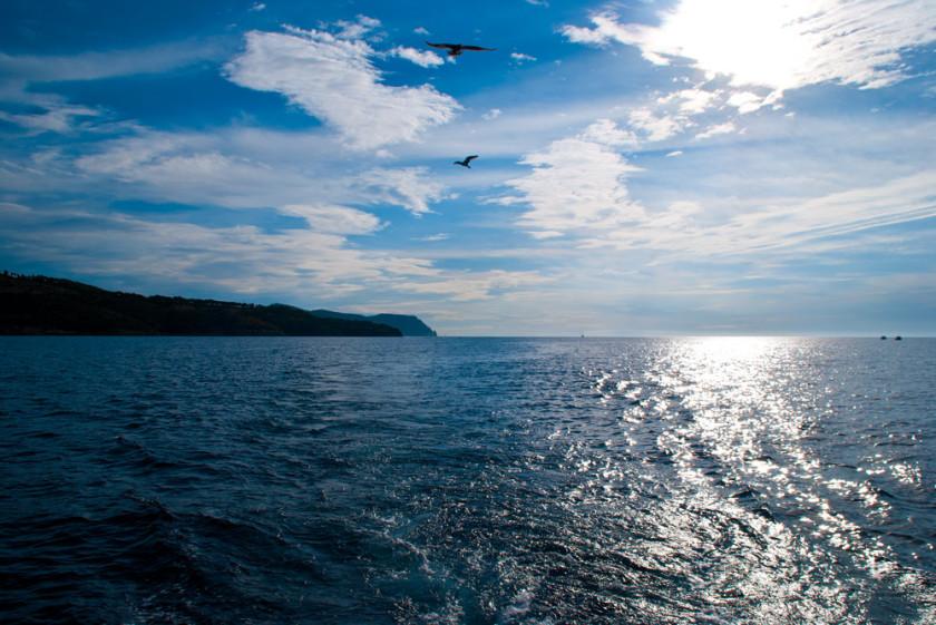 Die Möwen verfolgen das Boot den ganzen Tag lang.