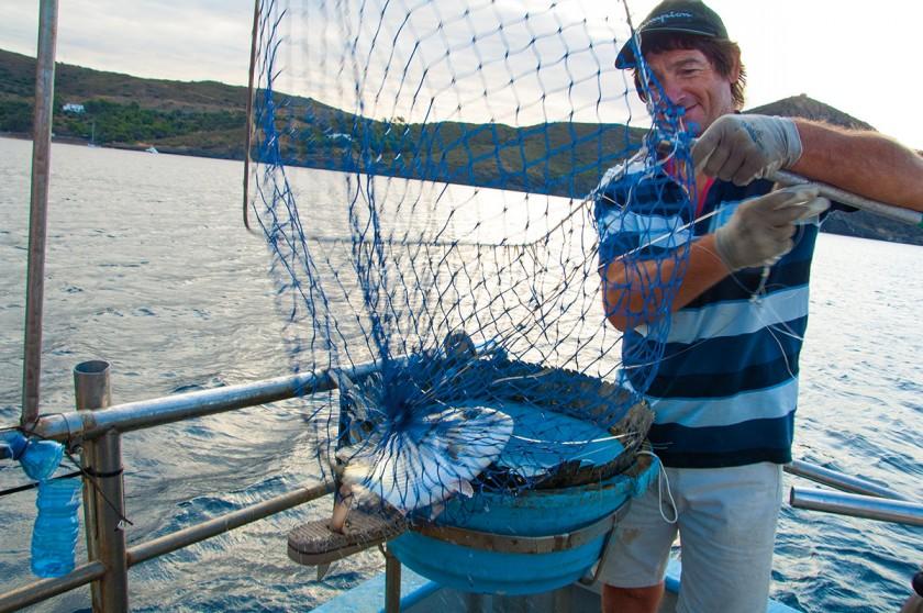 Fisch im Fischernetz