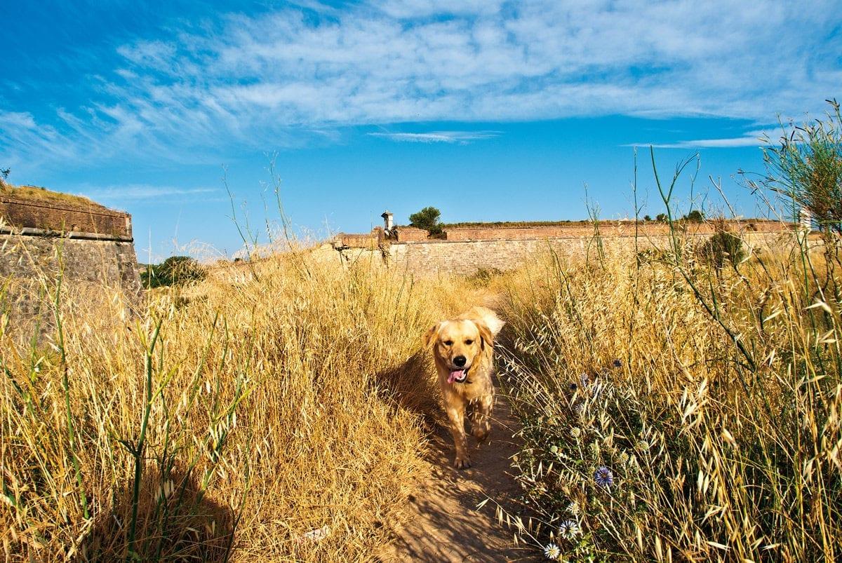 Sant Ferran Hund